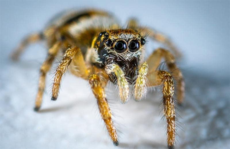 GoogleBot Spider di Google: Come Funziona?
