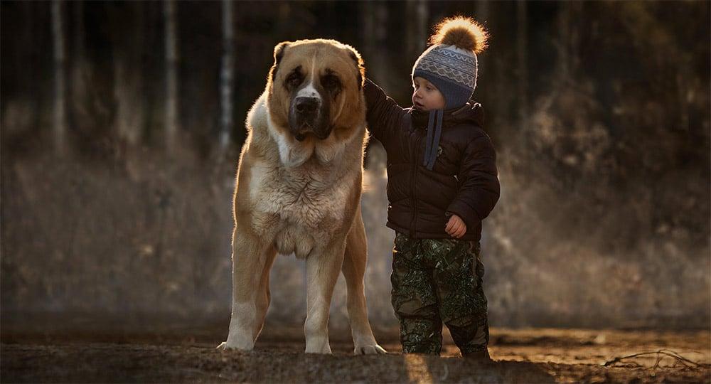Fundación Affinity: Gli Animali Migliorano Qualunque Situazione (2014)